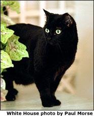 India cat